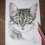 Kadriart portree joonistused ja illustratsioonid kass-150x150