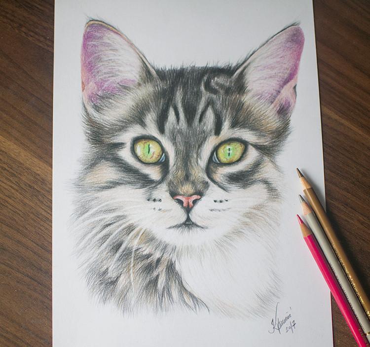 Kadriart portree joonistused ja illustratsioonid kass