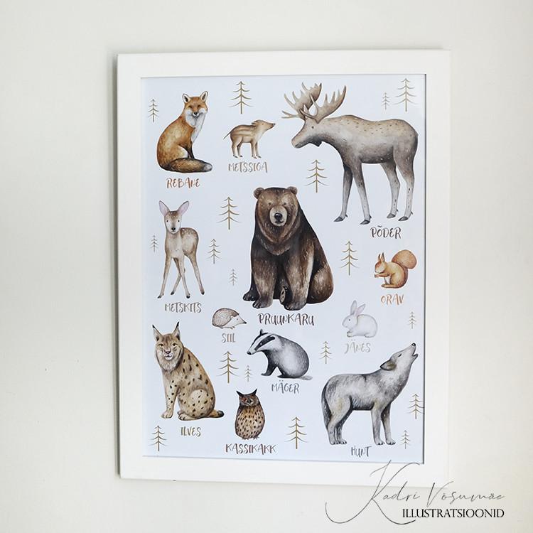 Kadriart portree joonistused ja illustratsioonid Kadri-Võsumäe-illustratsioonid-18