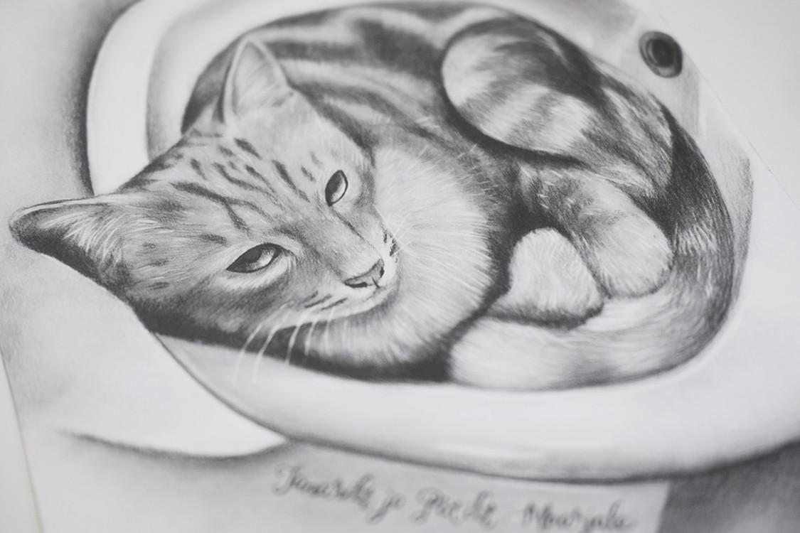 Joonistus kassist
